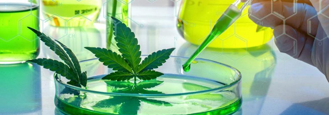 Les bienfaits du cannabis thérapeutique
